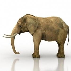 الفيل واقعية