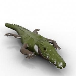 تمساح إستوائي