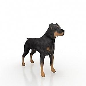كلب الصيد الألماني