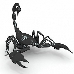 Animal Scorpion