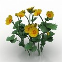 Flower Potentilla Fragiformis 3D Model
