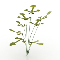 Plant Pteris Fern 3D Model