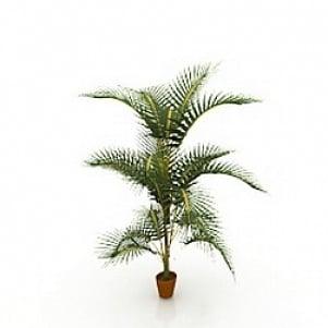Palm Green 3D Model