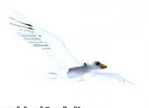 Paloma pájaro