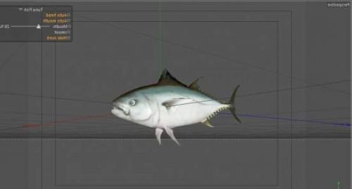 Tuna Fish Sea Animal