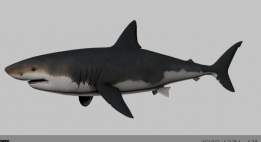 Megalodon Free 3d Model Id6863 Free Download Obj