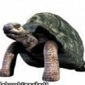 Big Tortoise (turtle) Free 3d Model