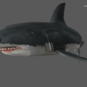 Jaws Unleashed Shark Free 3d Model