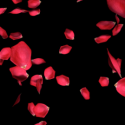 Flying Rose Petals