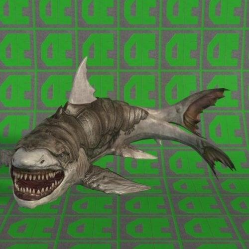 زرالوك القرش