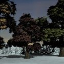 Collection Oaks Trees Free 3d Models