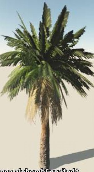 Realistic Palm Tree