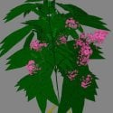 Low Poly Flower Free 3d Model