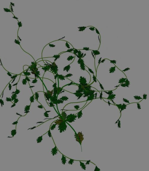 Climbing Plants 3d Model ID9268 - Free Download ( 3ds,  obj
