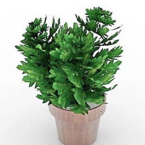 屋内家の植物とポット