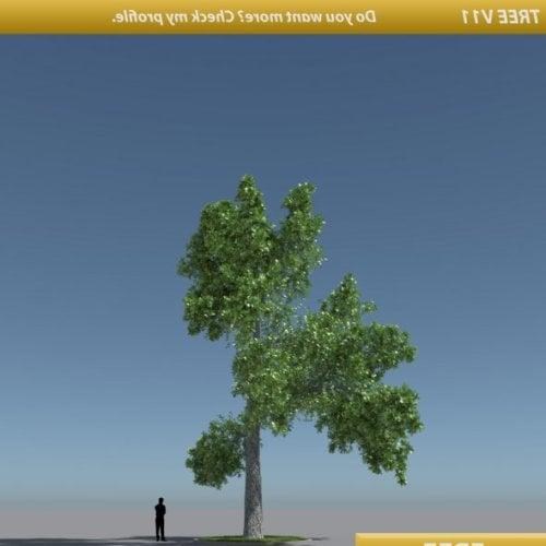 Korkea puu tammi