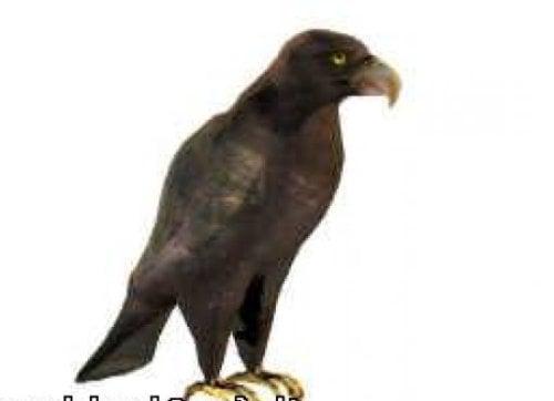Animal águila