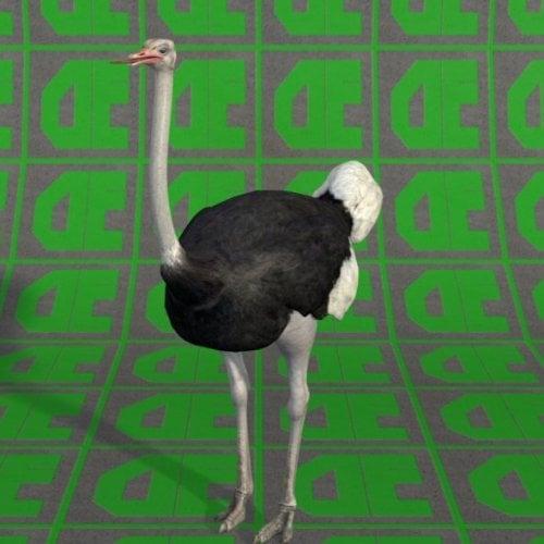 Avestruz Animal Gratis