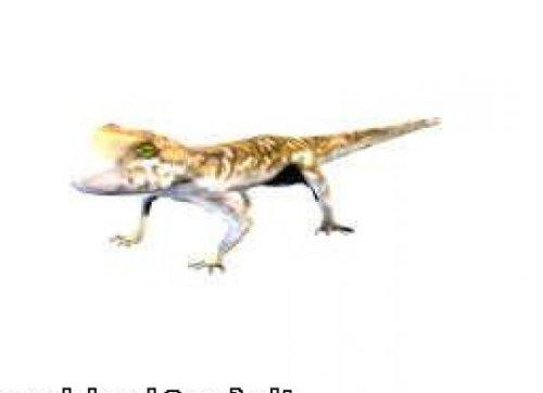 Gecko Lizard Animal