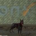 Zombie Dog Free 3d Model