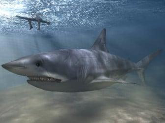 القرش واقعية