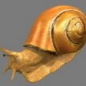 Snail 3d Max Model Free