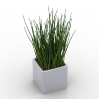 Plant Grass Potted