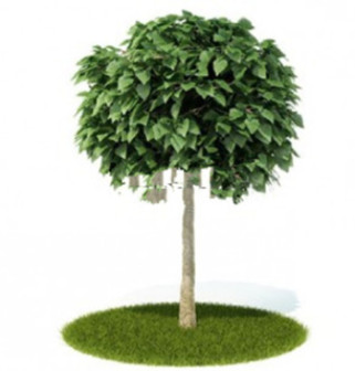 FREE 3D models, textures, trees, grass, fruits and