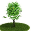 Park Plants 3d Max Model Free