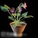 Indoor Bonsai Plant