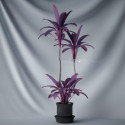 Purple Flower Bonsai Plant 3d Max Model Free