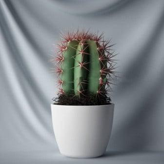 Ev kaktüs bitki