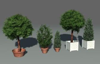 Park Plant Trees s