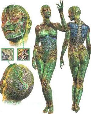 Human Figures Role 3dsMax Model Free