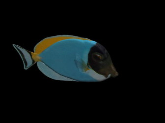Värikäs kala meri eläin
