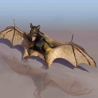 الخفافيش الحيوان