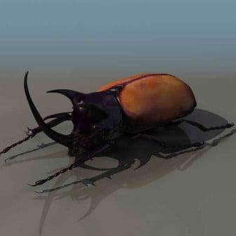 Beetle 3dsMax Model Animal