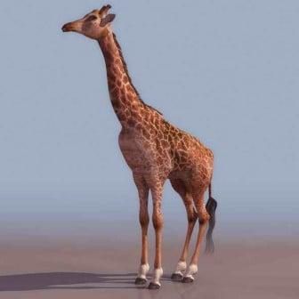 Jirafa animal