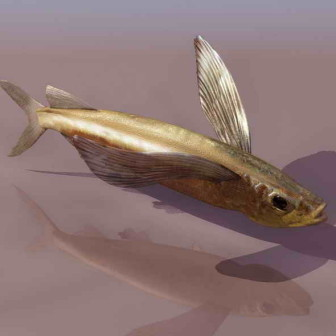 Fish Animals 14