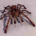 Spider Animal 3dsMax Model