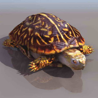 Turtles 3dsMax Model Animal