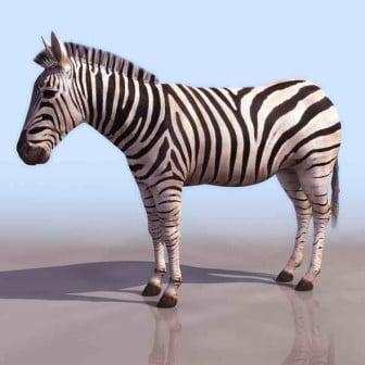 Zebra Animal 3dsMax Model