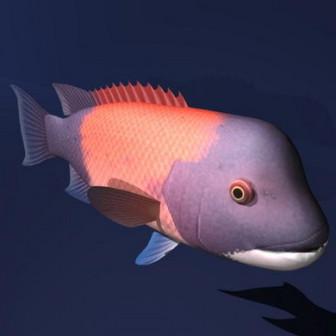 Eläimen iso pääkala