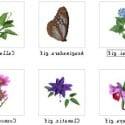 Çiçek 3D Modeli