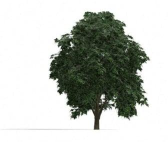 Exterior Tree