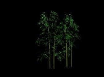 Plant Bamboo