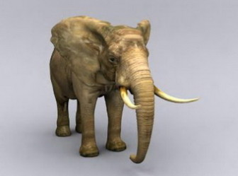 3d Max Model Elephant