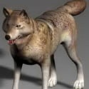 Animal Wolf Dog 3d Max Model