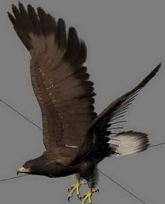 Animal Eagle Bird Hunting 3d Max Model