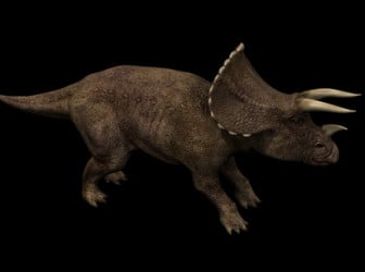 Triceratops Dinosaur 3ds Max Model